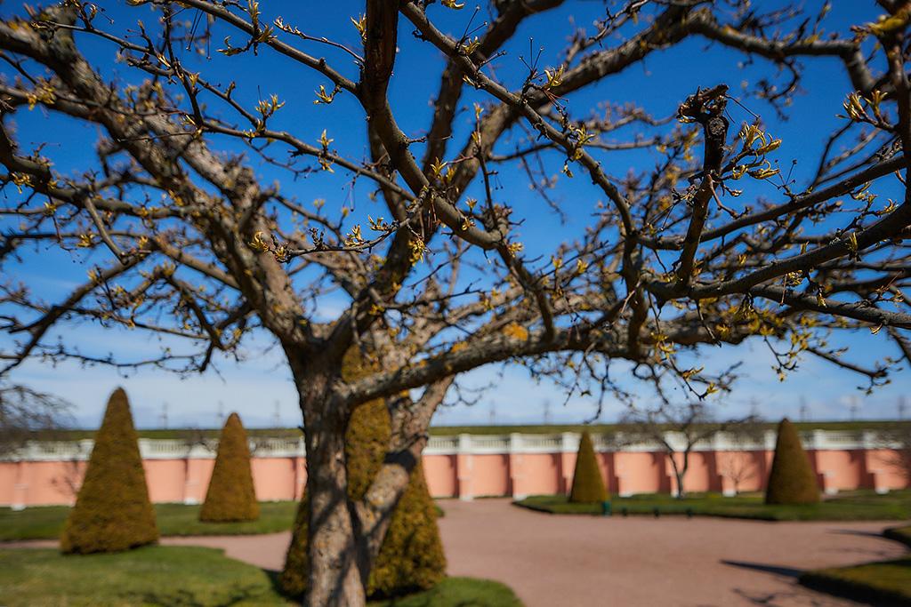 Весна в Петергофе