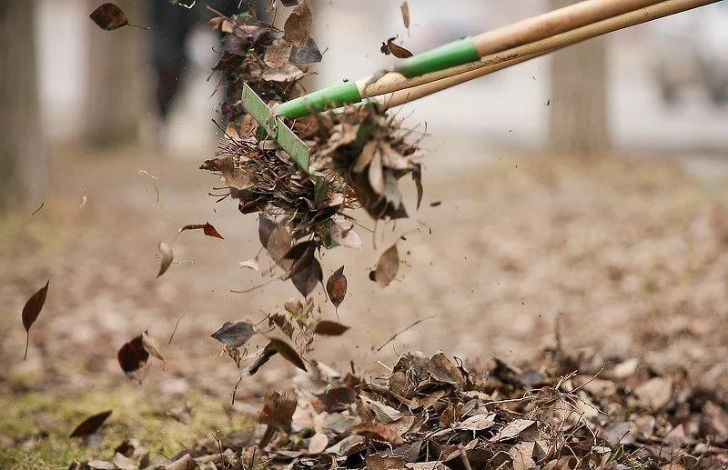 Жителей Петродворцового района приглашают оценить качество весенней уборки