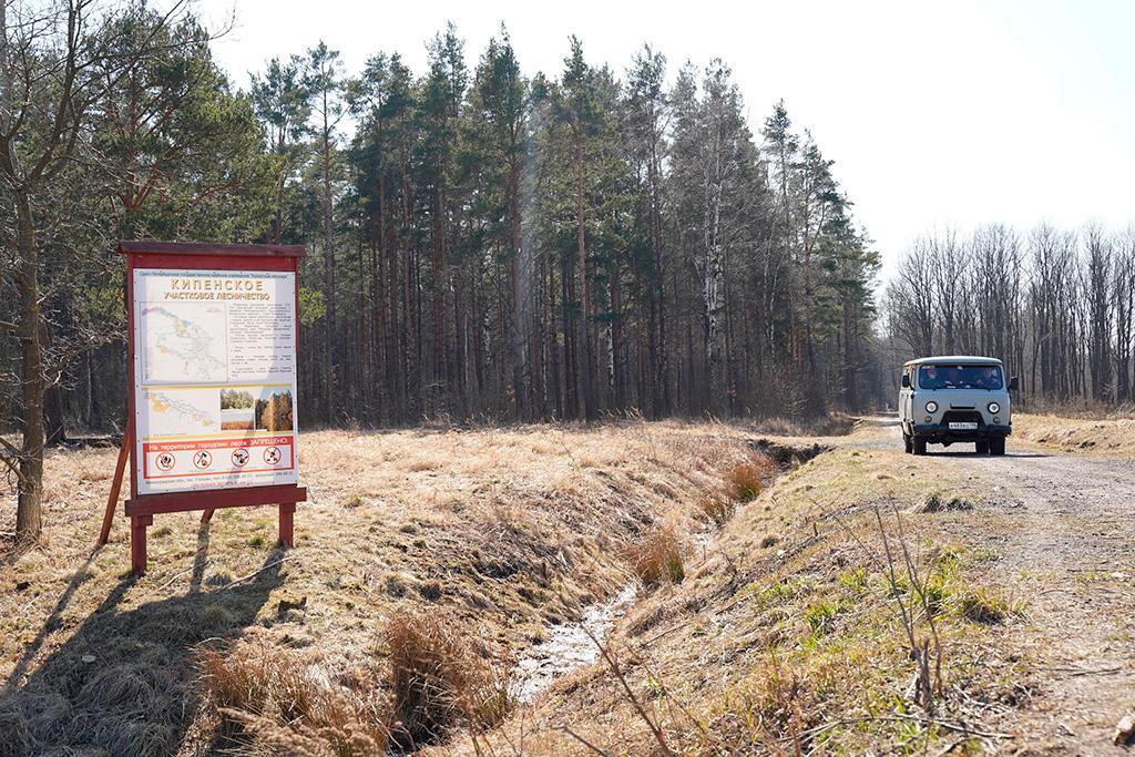 Посещать леса Ленобласти теперь запрещено
