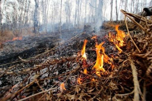 В Петербурге противопожарный режим продлевается по 5 июля
